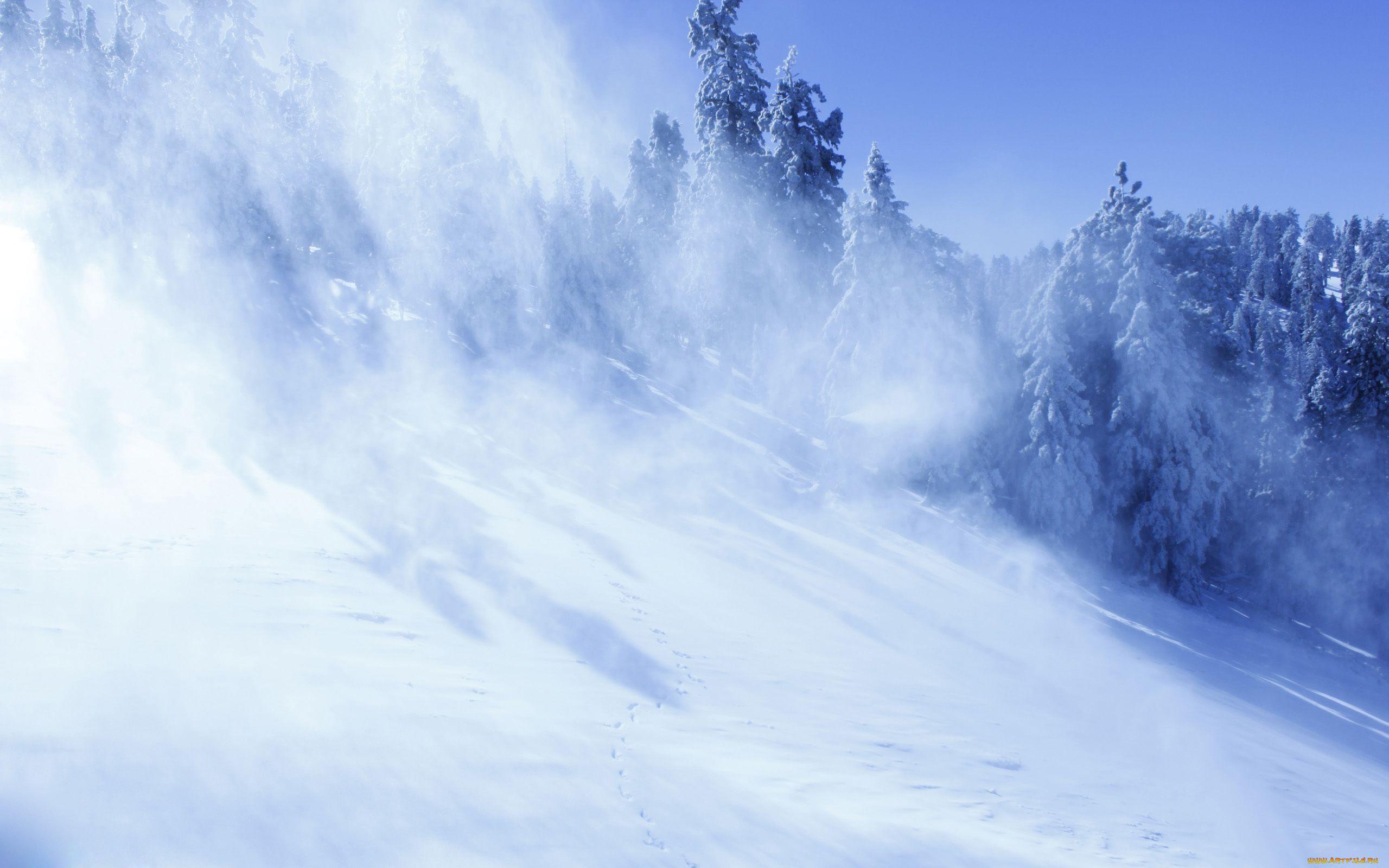 Зимняя елка хогвартс фото продаже домов